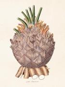 Plakat Palm detalj 18x24 cm